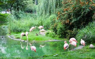 Развлечения в Варшаве: зоопарк, парк развлечений, лошади